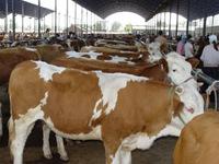 大畜网优质供应商:嘉祥县鸿雁养殖场