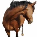 英系纯血马——马驹
