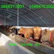 大畜网优质供应商:山东梁山县畜牧局牛羊驴养殖场
