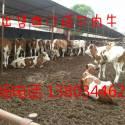 山西忻州八一牧业供