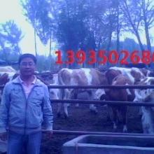 大畜网优质供应商:山西绿色牧业牛场总场