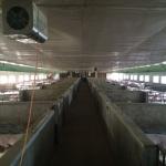养猪场专用空间净化
