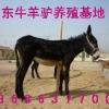 供应山东大型肉驴养殖场肉驴育肥品种肉驴供求市场