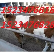 大畜网优质供应商:山西养殖专业合作