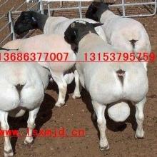 大畜网优质供应商:山东建成牧业牛羊驴良种繁育基地
