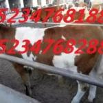 合作社转型急售肉牛