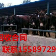大畜网优质供应商:嘉祥万头牛羊养殖场