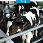 橡胶牛床垫 畜牧垫