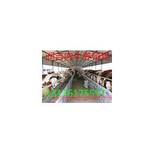 大畜网优质供应商:畜牧扶贫办润吉牧业牛羊驴养殖基地